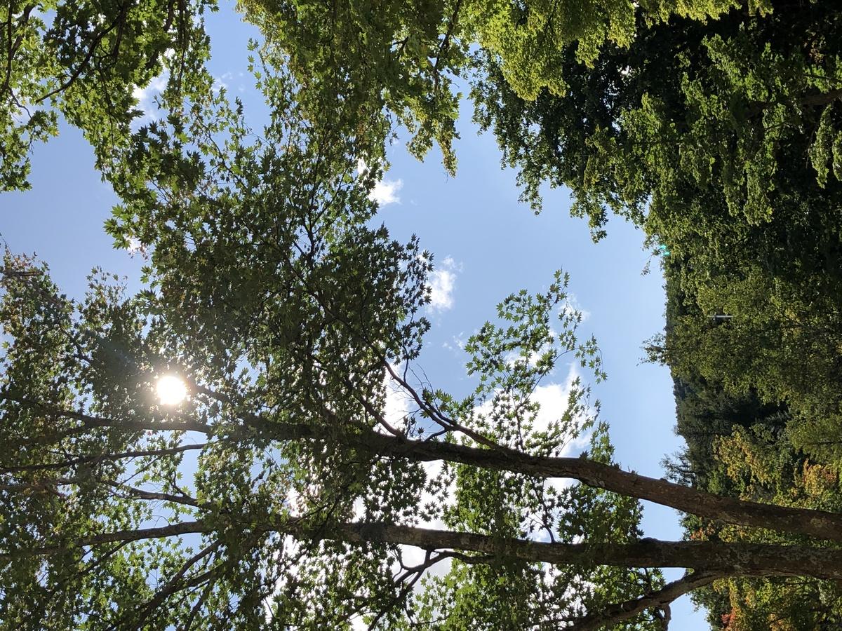 リフレッシュ木